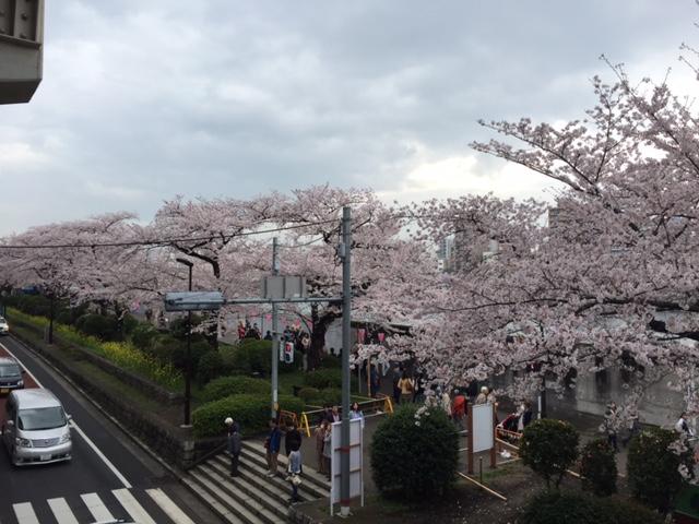 江戸時代の花見-桜の名所の墨堤
