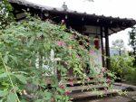 秋の七草、萩の名所-龍眼寺
