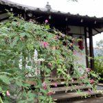 萩と龍眼寺