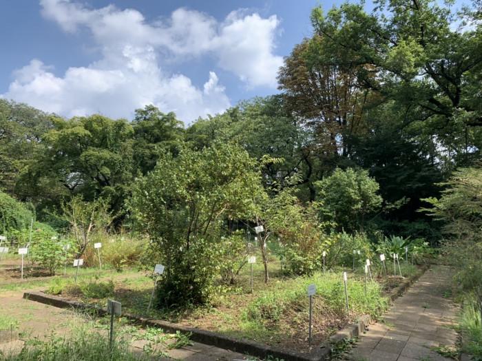 小石川植物園内の薬物保存園。薬用植物100種ほどが栽培されている