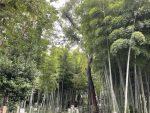 江戸のブランド野菜-目黒のタケノコと江戸野菜
